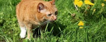 Giftige Stoffe und Pflanzen für Katzen und ungiftige Zimmerpflanzen im Überblick_planetbox-duentscheidest.de_news_katzen_tip_tipps_planetbox