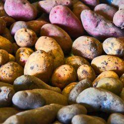 Kartoffel_knolle_rezepte_wissen_kochen_gesund_News-Planetbox-duentscheidest.de_planetbox-du_entscheidest_Nachtschattengewächse_