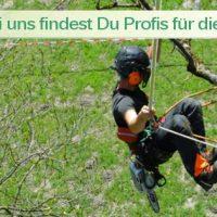 Baumpflegeportal Ihr Infoportal rund um Baumpflege