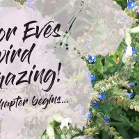 ALL FOR EVES Organic Beauty / Biomazing