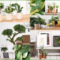 EVRGREEN.de Online-Shop für Zimmerpflanzen
