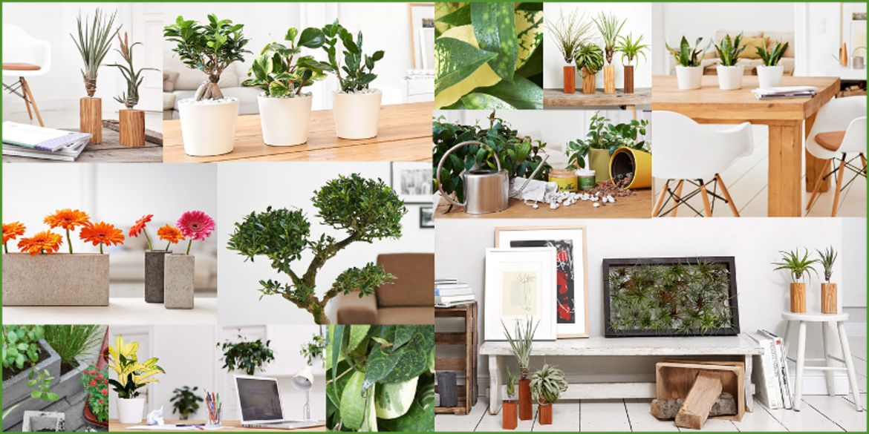 online shop f r zimmerpflanzen planetbox. Black Bedroom Furniture Sets. Home Design Ideas