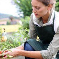 Gartenparten.org