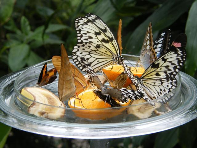 Sommerhitze Schmetterlinge Futtern Helfen Wie Du Es Am Besten