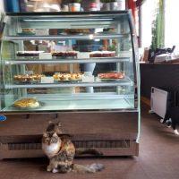 Cats Café / Karlsruhe