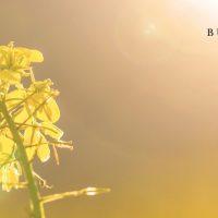 Buntfink Bio Kosmetik